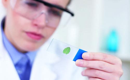 Лаборантка в защитных очках внимательно смотрит на зелёный листочек
