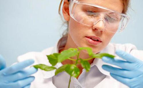 Лаборантка озабоченно изучает зелёные листочки