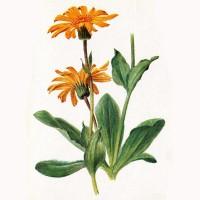 Рисунок показывает строение растения