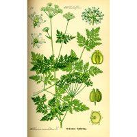 Подробная картинка растения