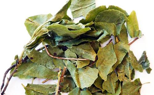 Буроватые сухие листья грушовника
