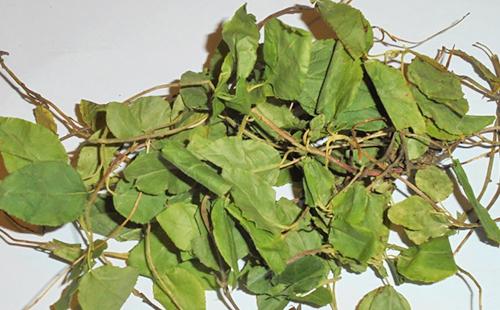 Россыпь увядших листьев кому-то пользу принесёт
