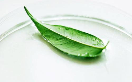 Зелёный листок на предметном стекле
