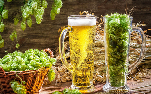 Полный бокал пенного пива и продукты, из которого оно было сварено