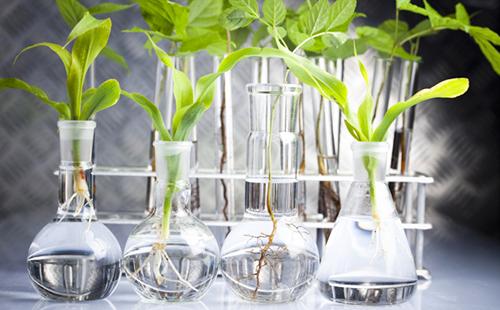 Зелёные листочки в лабораторных колбах