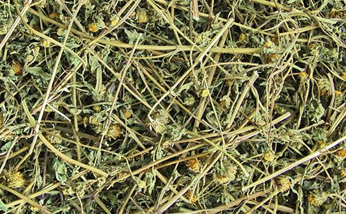Сушёная трава собачьи репехи
