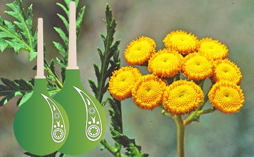 Зелёные клизмы на фоне жёлтого соцветия