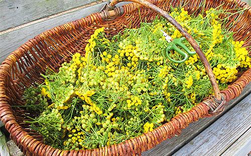 Плетёная корзина со срезанными ножницами головками цветов