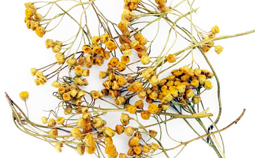Сухие цветки и трава пижмы
