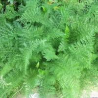 Хитроумные листья порезной травы