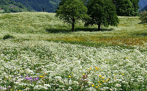 Раскинулось летнее поле