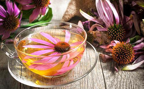 Золотой отвар из пурпурных цветов