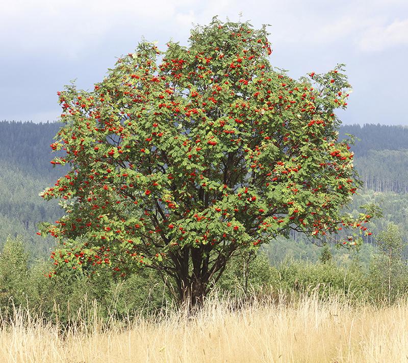 быстрые, надежные фото всех деревьев растущих в костроме важными моментами