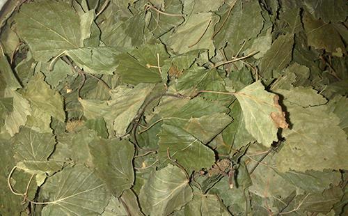 Ворох сушёных листьев берёзы