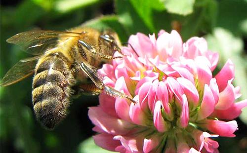 Пчёлка кушает свой хлеб