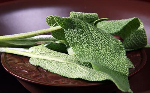 Сероватые листья шальвии