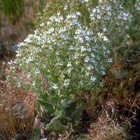 Экзотический белый цветок