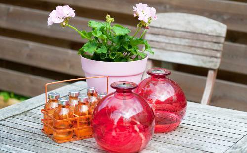 Склянки с душистым маслом возле горшочка с цветком