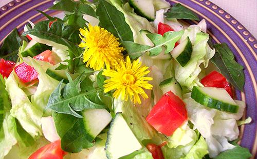 Овощной салат со свежей зеленью дикого молочая