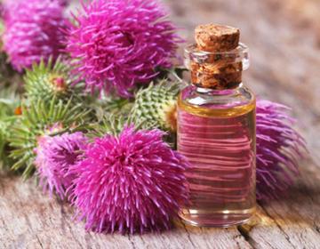Лечение волос репейным маслом — Волосы