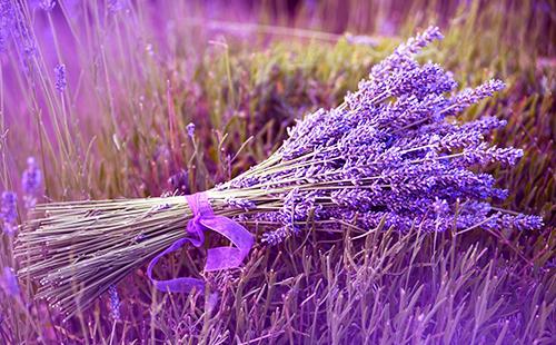 Пучок цветной травы, перевязанный ленточкой