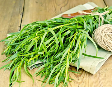 Применение и свойства травы Эстрагон