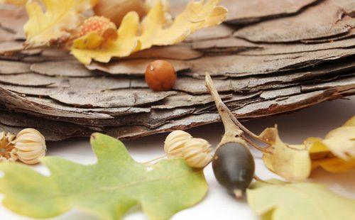 Листья и жолудь