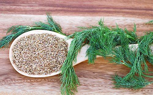 Семена и зелень укропа