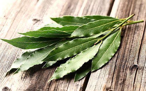 Листья эвкалиптового дерева