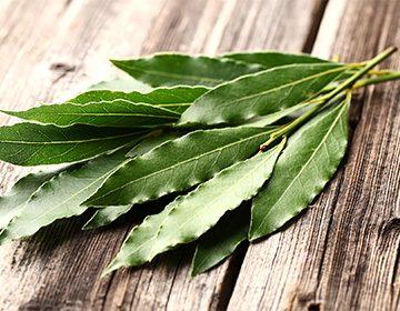 Лавровый лист- полезные свойства и противопоказания
