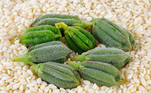 Зеленые стручки кунжута