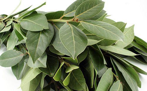 Листья лаврового куста