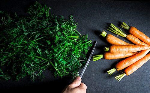 Морковь и ее ботва