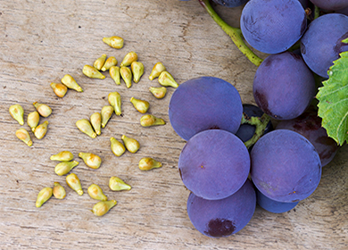 Выжимка из косточек винограда