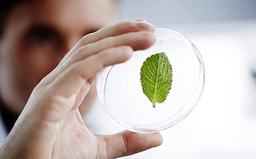 Лаборант изучает зелёный листок