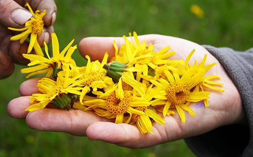 Золотые цветы на ладошке