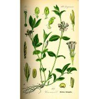 Зелёнка на старой иллюстрации