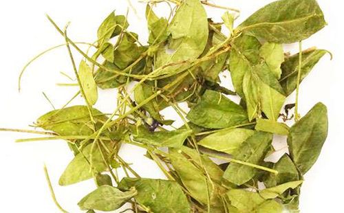 Сушёный лист травы барвинок