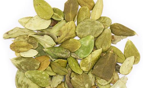 Сухие листья следует измельчить и заварить