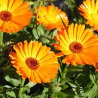 Ярко-оранжевое украшение сада