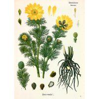 Рисунок жёлтого цветка