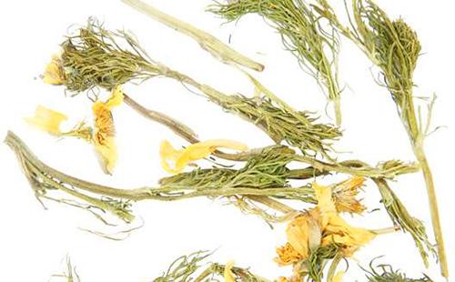 Сухие стебли и цветы лекарственного мохнатика