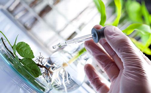 Анализ состава растения проводится в лаборатории