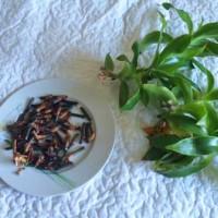 Как сделать настойку из растения золотой ус