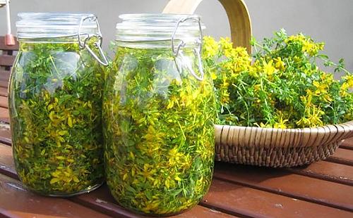 Сухие жёлтые цветки в стеклянных банках