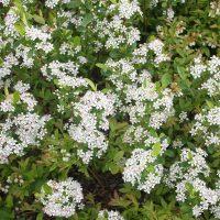 Весеннее цветение в полном разгаре