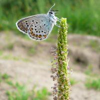 Бабочка присела отдохнуть на высокий цветок