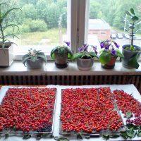 Плоды расстелили на бумаге перед окном
