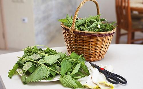 Собранные листья костырки в корзине