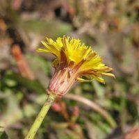Маленький ядовитый цветок